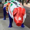 Ipswich Pigs Gone Wild 2016 - 34. Refuge